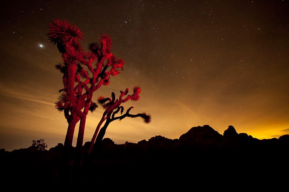JOSHUA TREE  NATIONAL MONUMENT, CALIFORNIA, USA